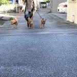 チョコママと初散歩